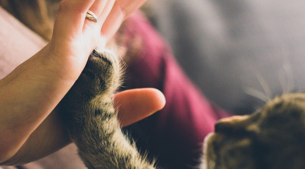 Katzenpfote und Menschenhand: High-Five.