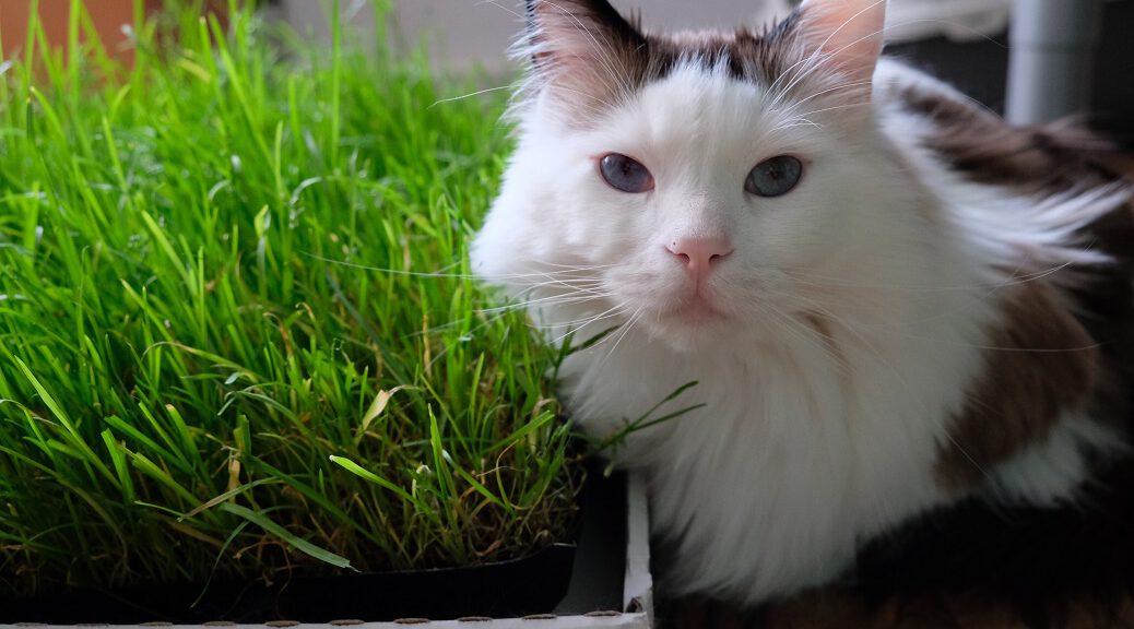 Katze sitzt neben Katzengras
