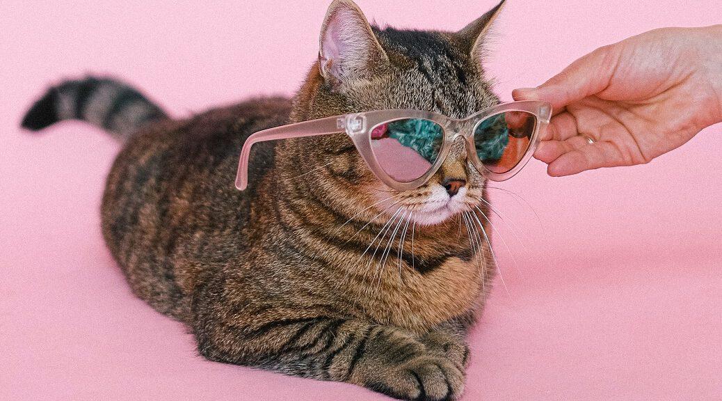 Katze mit Sonnenbrille bei Hitze