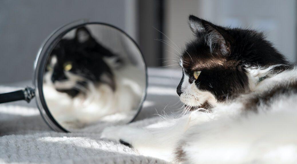 Katze schaut in Spiegel Fellpflege - Verfilzungen vermeiden