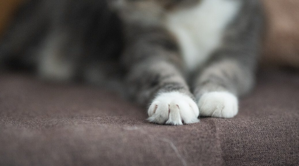 Katzen Pfoten Tatzen