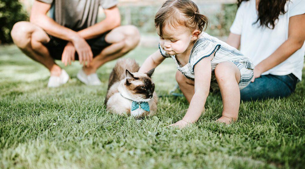 Kind streichelt eine Ragdoll Katze auf einer wiese