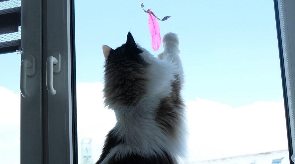 Spieletipp Ragdoll Katze spielt mit Feder am Fenster